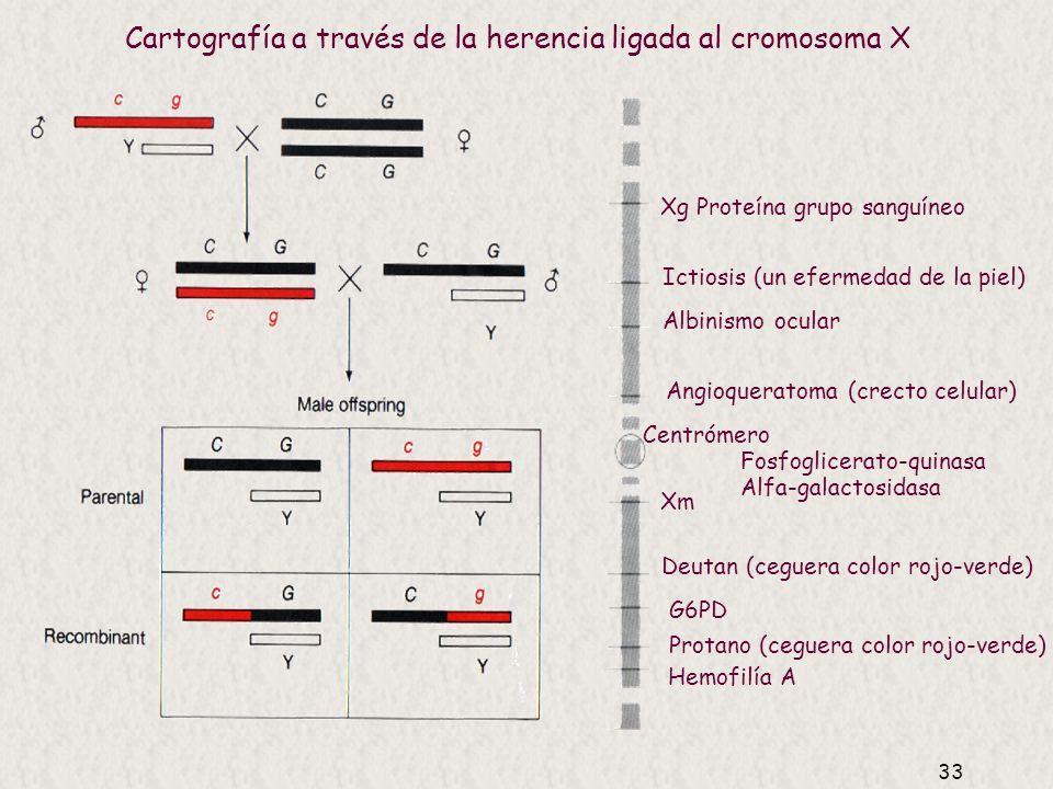 Cartografía a través de la herencia ligada al cromosoma X