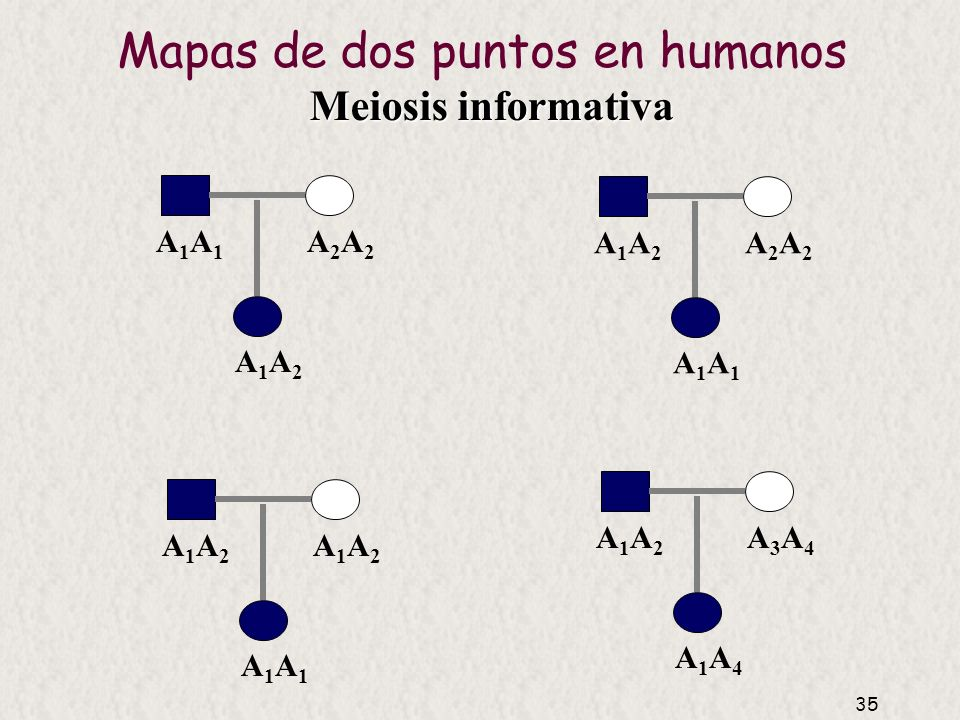 Mapas de dos puntos en humanos