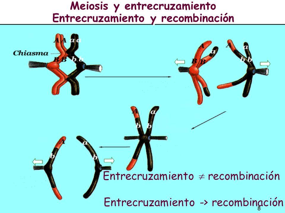 Meiosis y entrecruzamiento Entrecruzamiento y recombinación