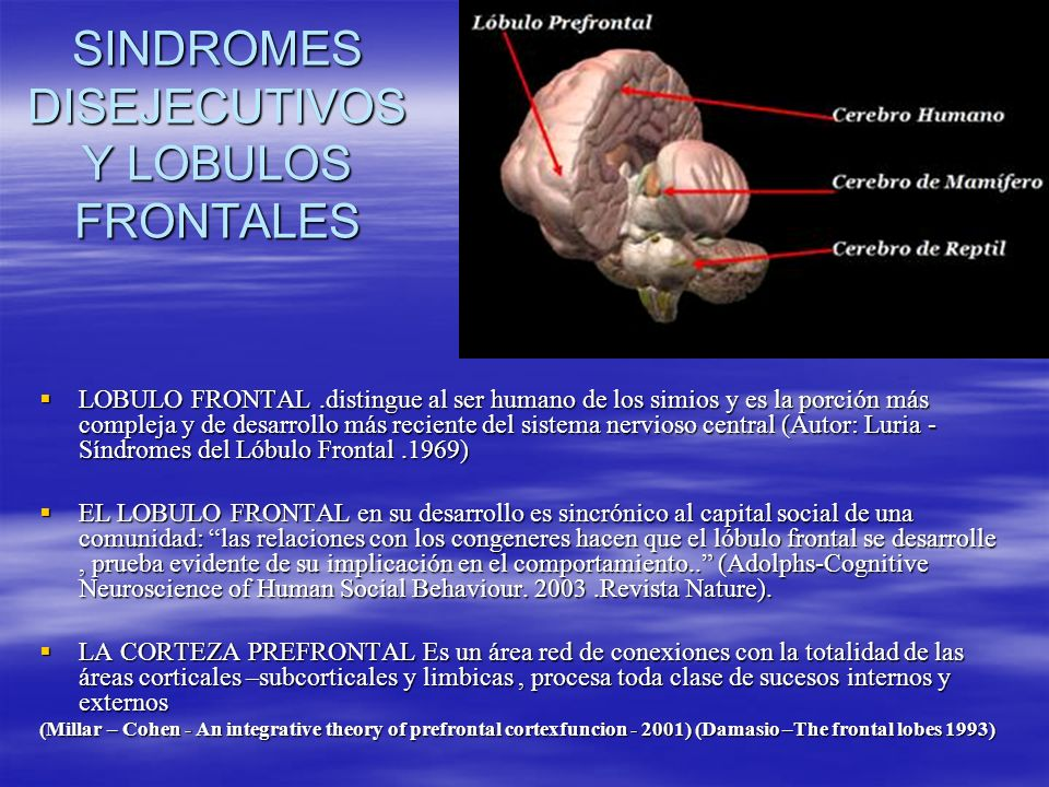 SINDROMES DISEJECUTIVOS Y LOBULOS FRONTALES