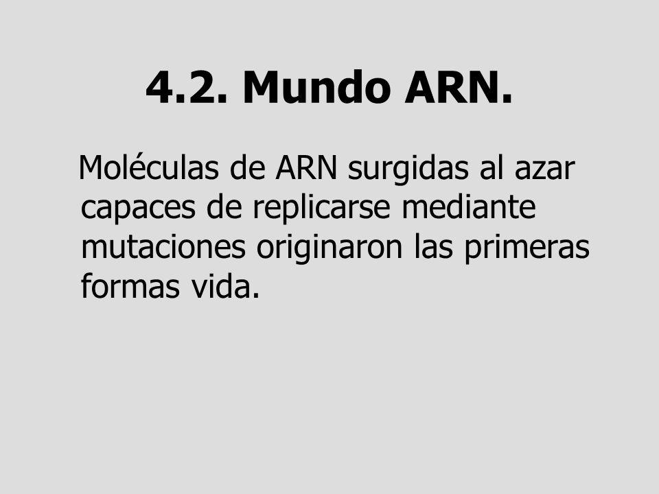 4.2. Mundo ARN.