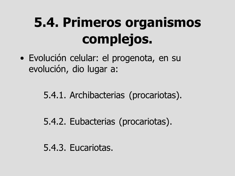 5.4. Primeros organismos complejos.