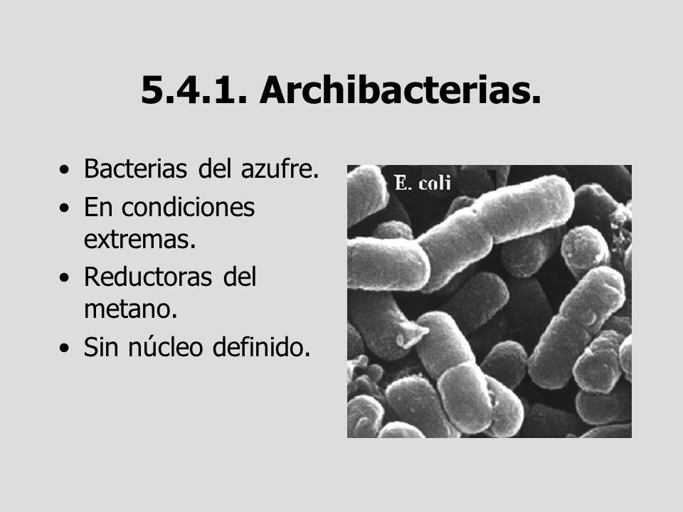 5.4.1. Archibacterias. Bacterias del azufre. En condiciones extremas.