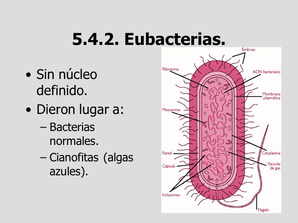 5.4.2. Eubacterias. Sin núcleo definido. Dieron lugar a: