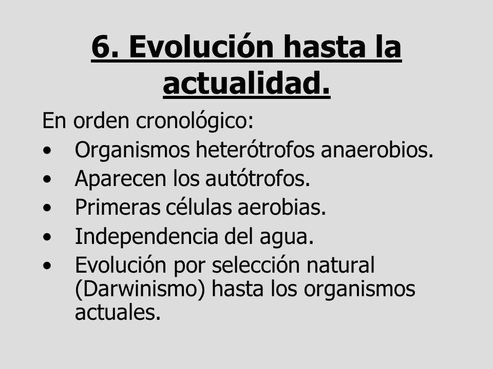 6. Evolución hasta la actualidad.