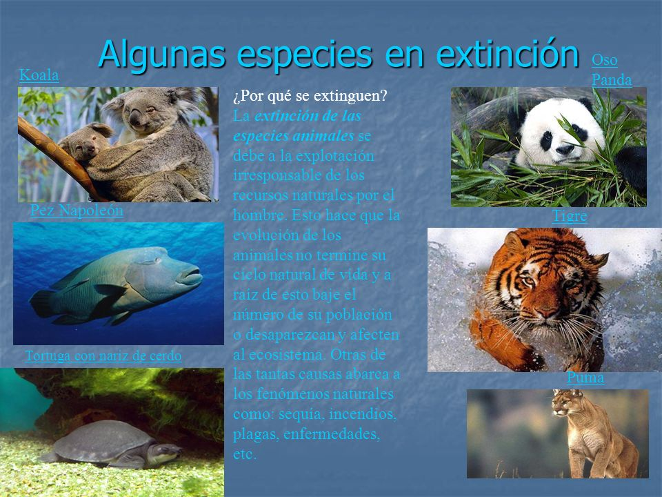 Algunas especies en extinción