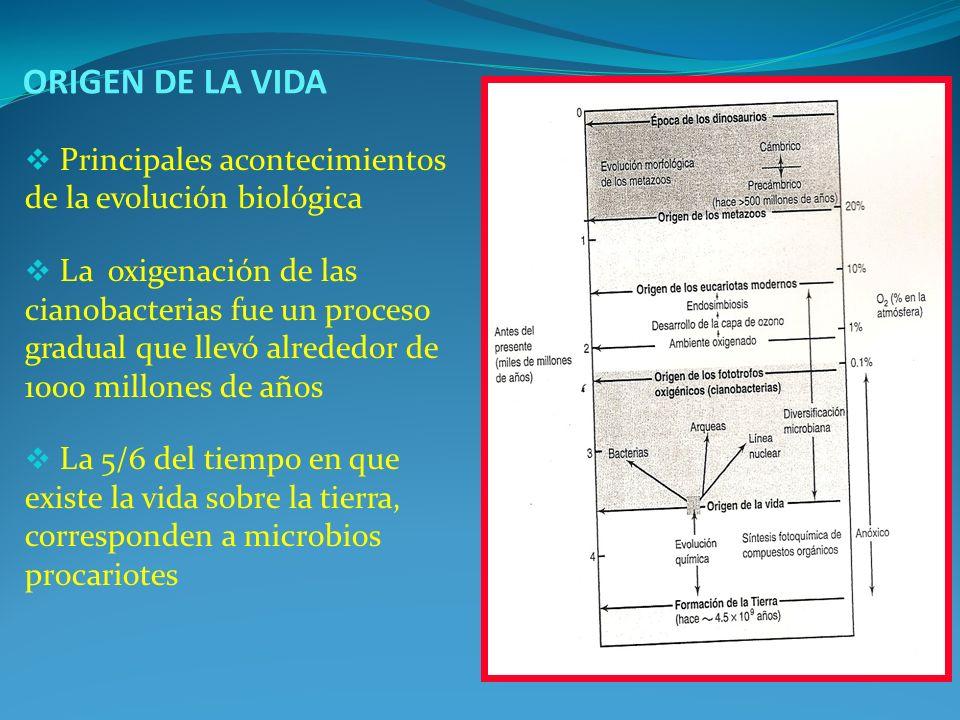 ORIGEN DE LA VIDA Principales acontecimientos de la evolución biológica.