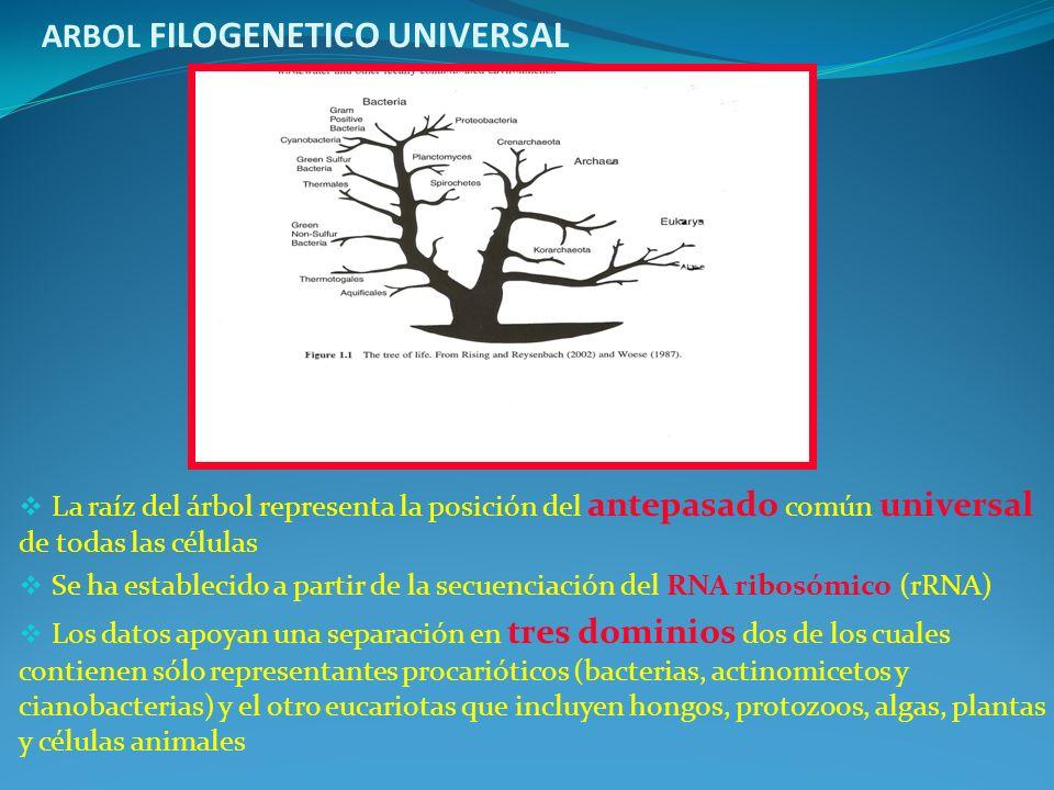 ARBOL FILOGENETICO UNIVERSAL
