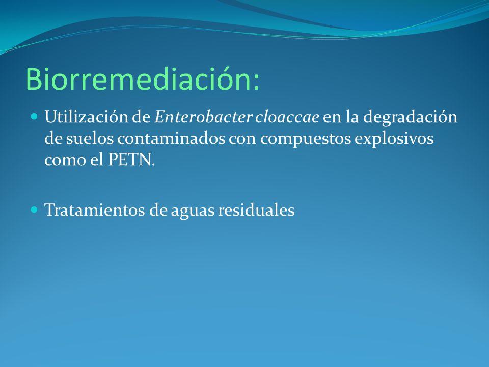 Biorremediación: Utilización de Enterobacter cloaccae en la degradación de suelos contaminados con compuestos explosivos como el PETN.