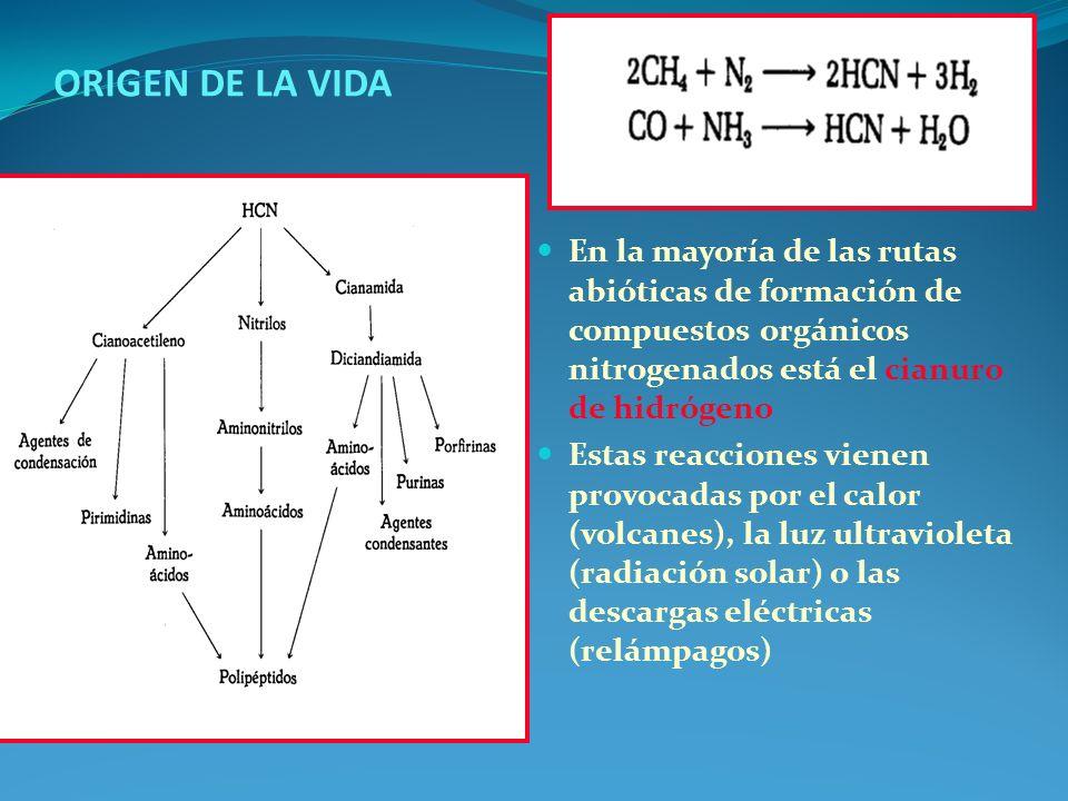 ORIGEN DE LA VIDA En la mayoría de las rutas abióticas de formación de compuestos orgánicos nitrogenados está el cianuro de hidrógeno.