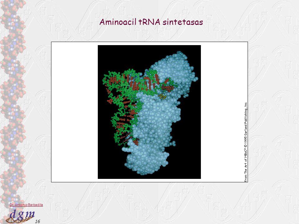 Aminoacil tRNA sintetasas