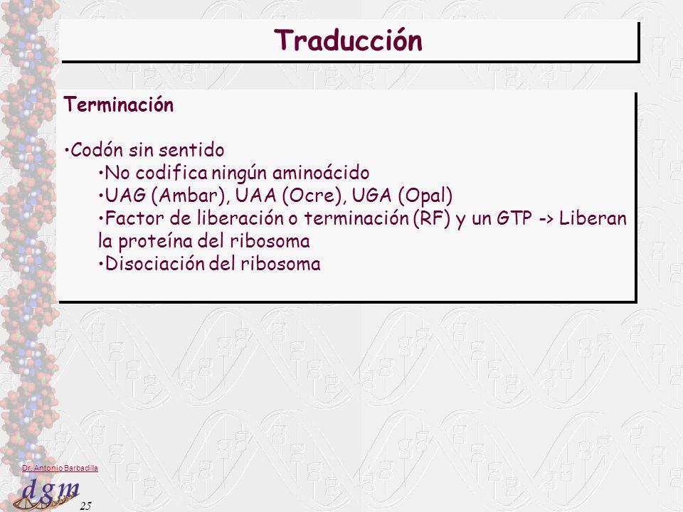 Traducción Terminación Codón sin sentido No codifica ningún aminoácido