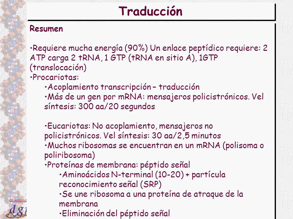 Traducción Resumen. Requiere mucha energía (90%) Un enlace peptídico requiere: 2 ATP carga 2 tRNA, 1 GTP (tRNA en sitio A), 1GTP (translocación)