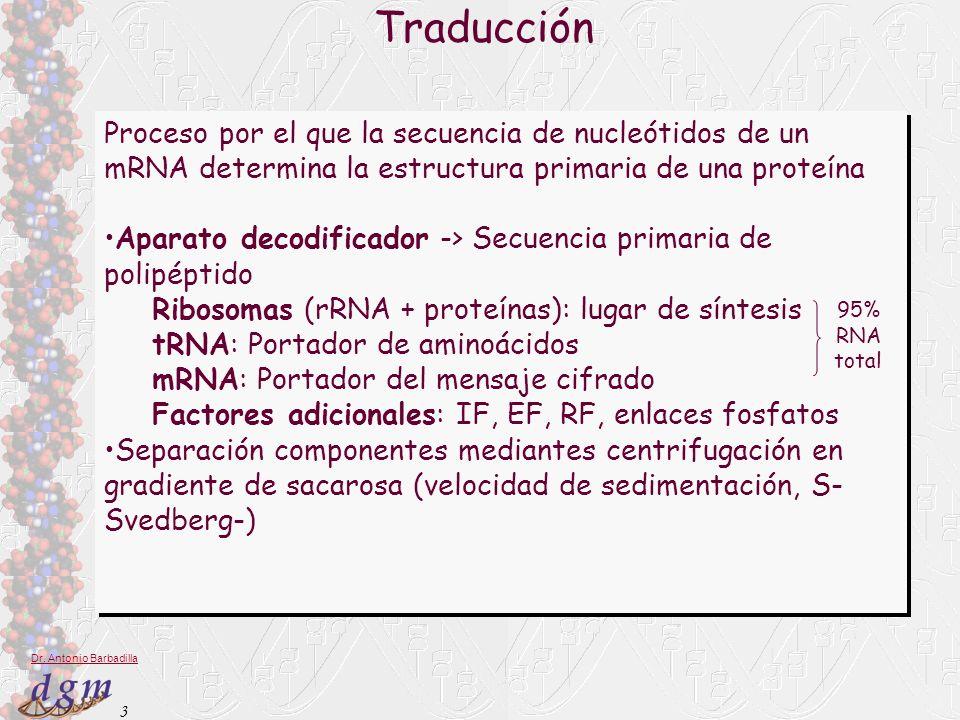Traducción Proceso por el que la secuencia de nucleótidos de un mRNA determina la estructura primaria de una proteína.