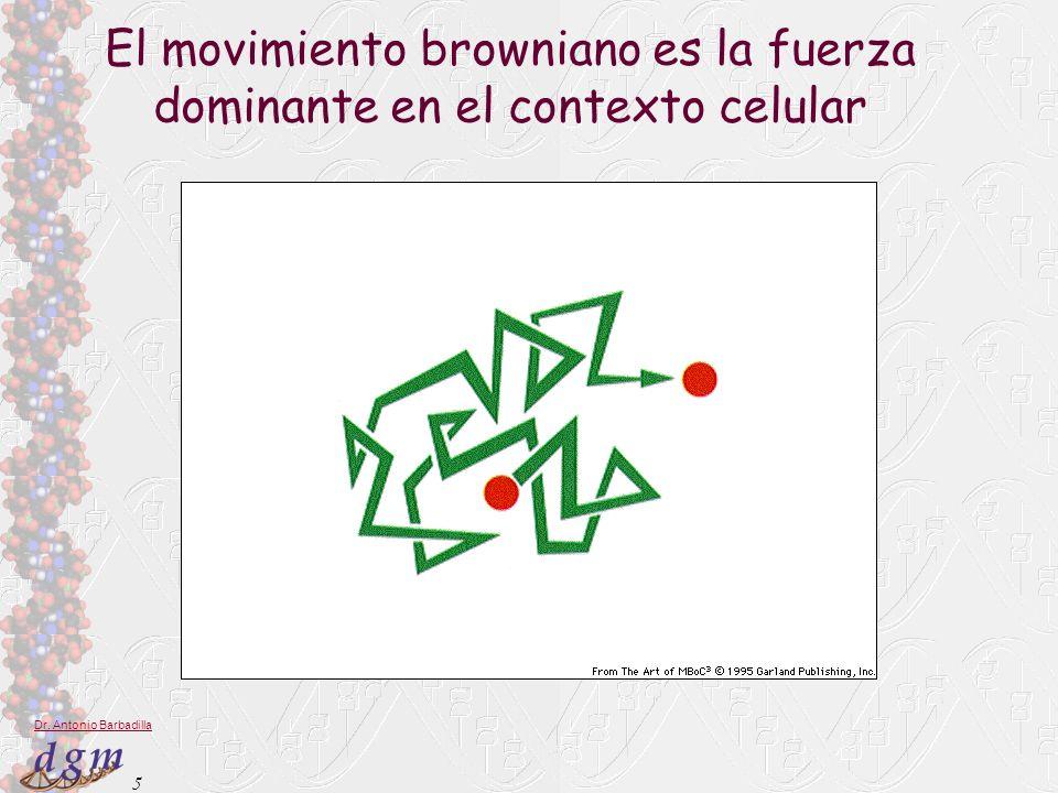 El movimiento browniano es la fuerza dominante en el contexto celular
