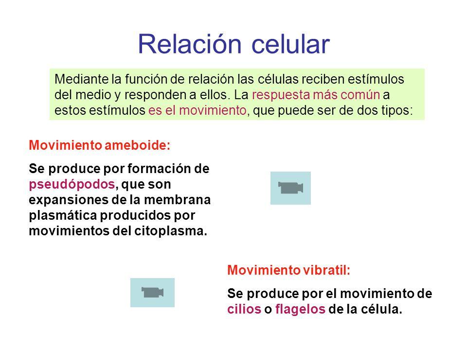 Relación celular