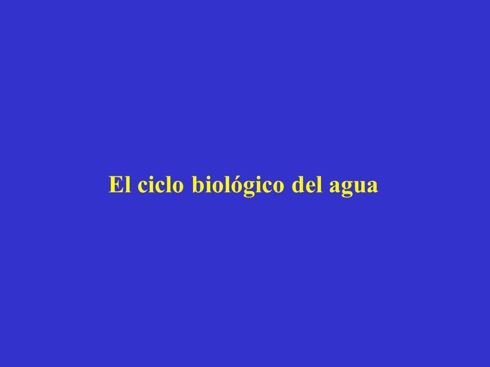 El ciclo biológico del agua