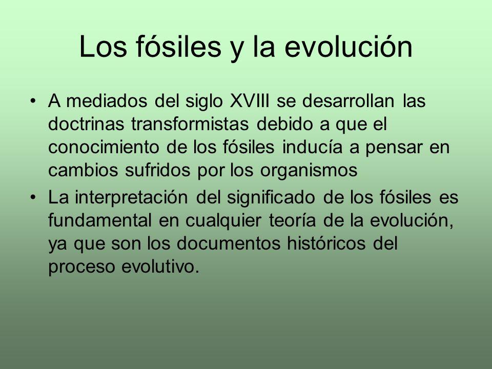 Los fósiles y la evolución