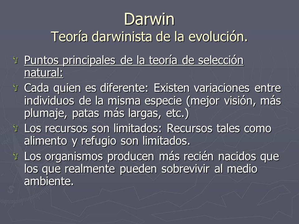 Darwin Teoría darwinista de la evolución.