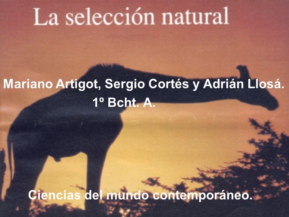 Mariano Artigot, Sergio Cortés y Adrián Llosá.
