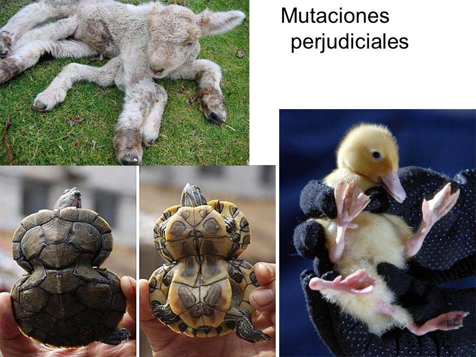 Mutaciones perjudiciales