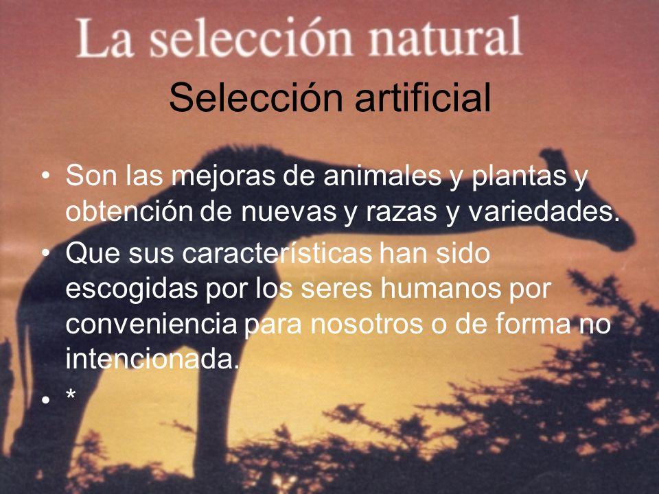 Selección artificial Son las mejoras de animales y plantas y obtención de nuevas y razas y variedades.