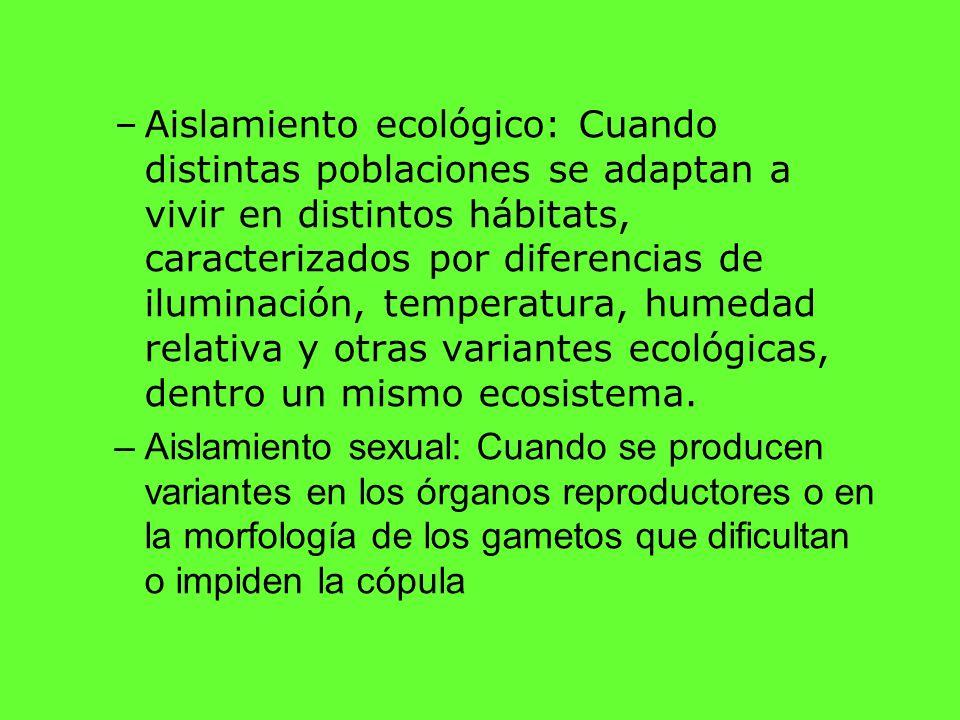 Aislamiento ecológico: Cuando distintas poblaciones se adaptan a vivir en distintos hábitats, caracterizados por diferencias de iluminación, temperatura, humedad relativa y otras variantes ecológicas, dentro un mismo ecosistema.