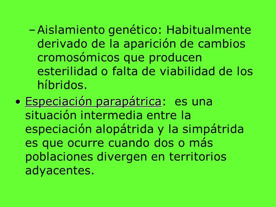 Aislamiento genético: Habitualmente derivado de la aparición de cambios cromosómicos que producen esterilidad o falta de viabilidad de los híbridos.