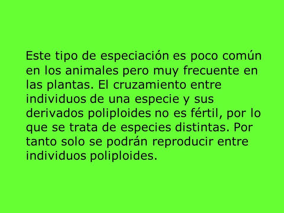 Este tipo de especiación es poco común en los animales pero muy frecuente en las plantas.