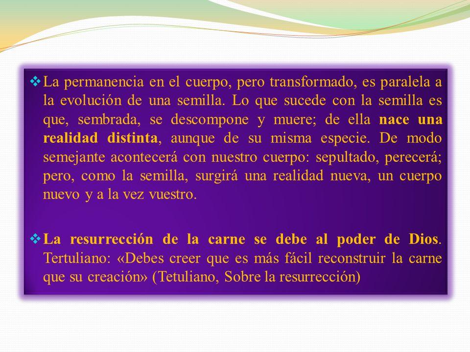 La permanencia en el cuerpo, pero transformado, es paralela a la evolución de una semilla. Lo que sucede con la semilla es que, sembrada, se descompone y muere; de ella nace una realidad distinta, aunque de su misma especie. De modo semejante acontecerá con nuestro cuerpo: sepultado, perecerá; pero, como la semilla, surgirá una realidad nueva, un cuerpo nuevo y a la vez vuestro.