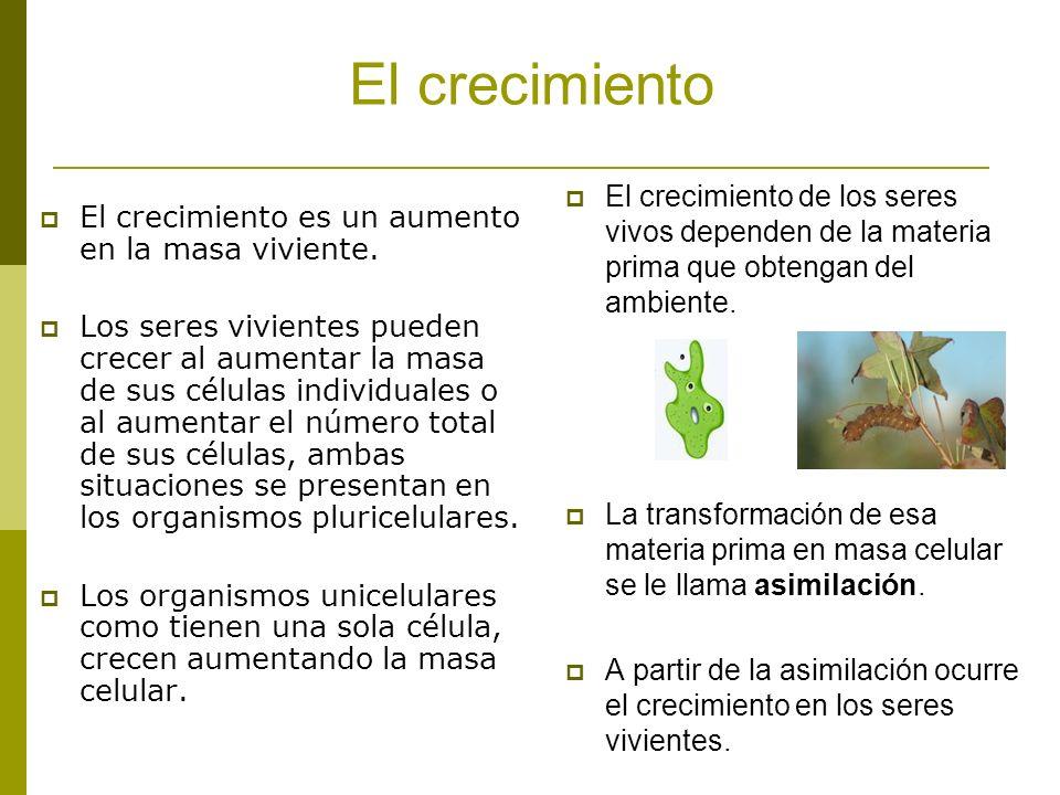 El crecimiento El crecimiento de los seres vivos dependen de la materia prima que obtengan del ambiente.
