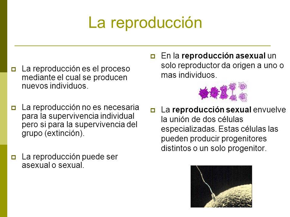 La reproducción En la reproducción asexual un solo reproductor da origen a uno o mas individuos.