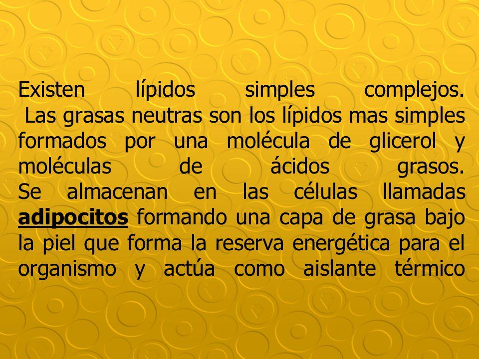 Existen lípidos simples complejos