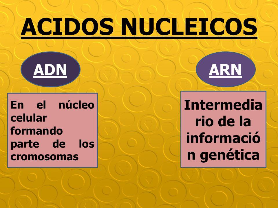 Intermediario de la información genética
