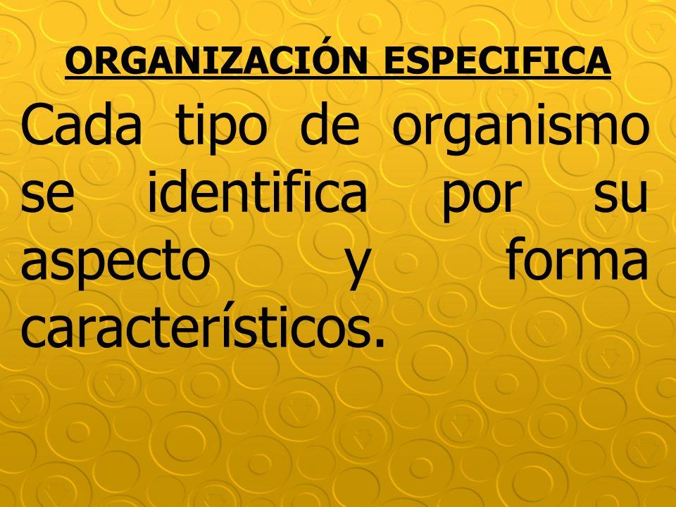 ORGANIZACIÓN ESPECIFICA