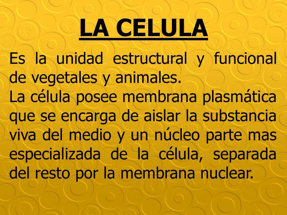 LA CELULA Es la unidad estructural y funcional de vegetales y animales.