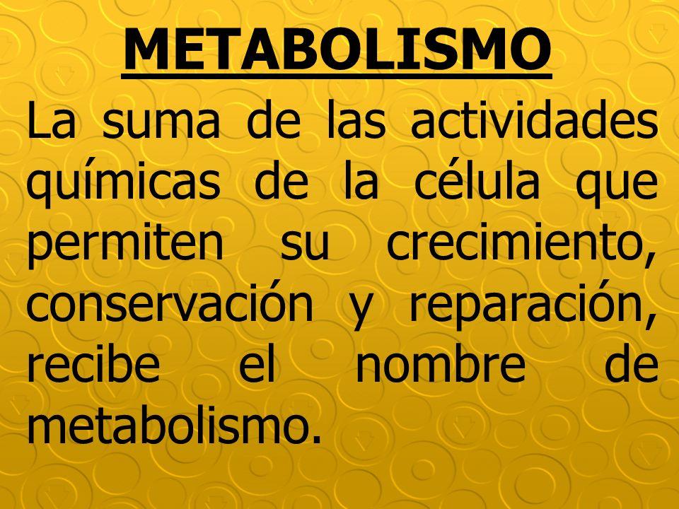 METABOLISMO La suma de las actividades químicas de la célula que permiten su crecimiento, conservación y reparación, recibe el nombre de metabolismo.