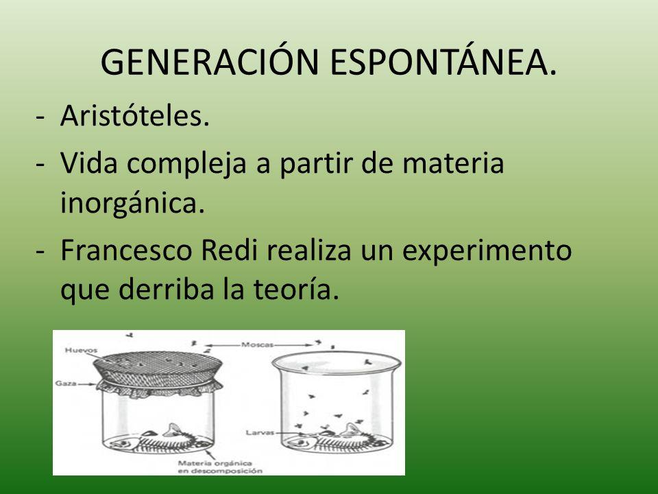 GENERACIÓN ESPONTÁNEA.