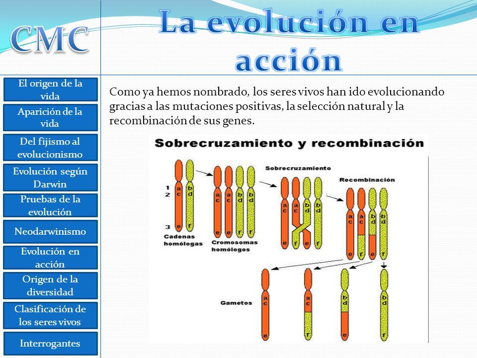 La evolución en acción