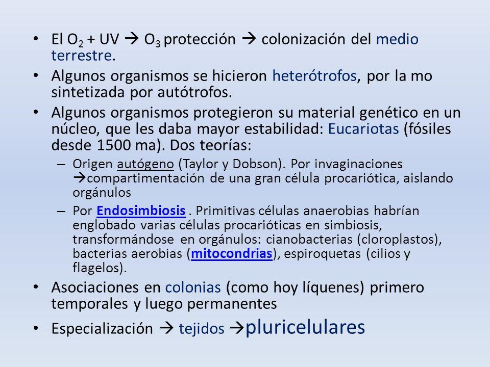 El O2 + UV  O3 protección  colonización del medio terrestre.