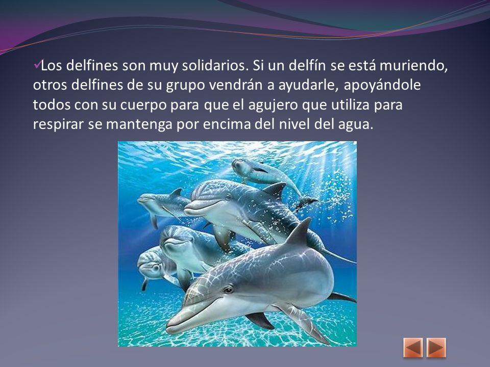 Los delfines son muy solidarios