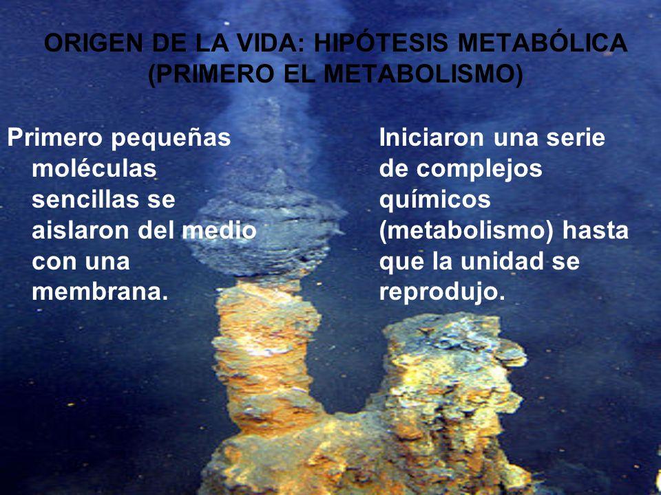 ORIGEN DE LA VIDA: HIPÓTESIS METABÓLICA (PRIMERO EL METABOLISMO)