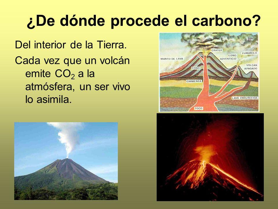 ¿De dónde procede el carbono