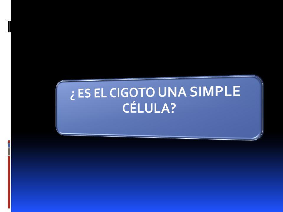 ¿ ES EL CIGOTO UNA SIMPLE CÉLULA