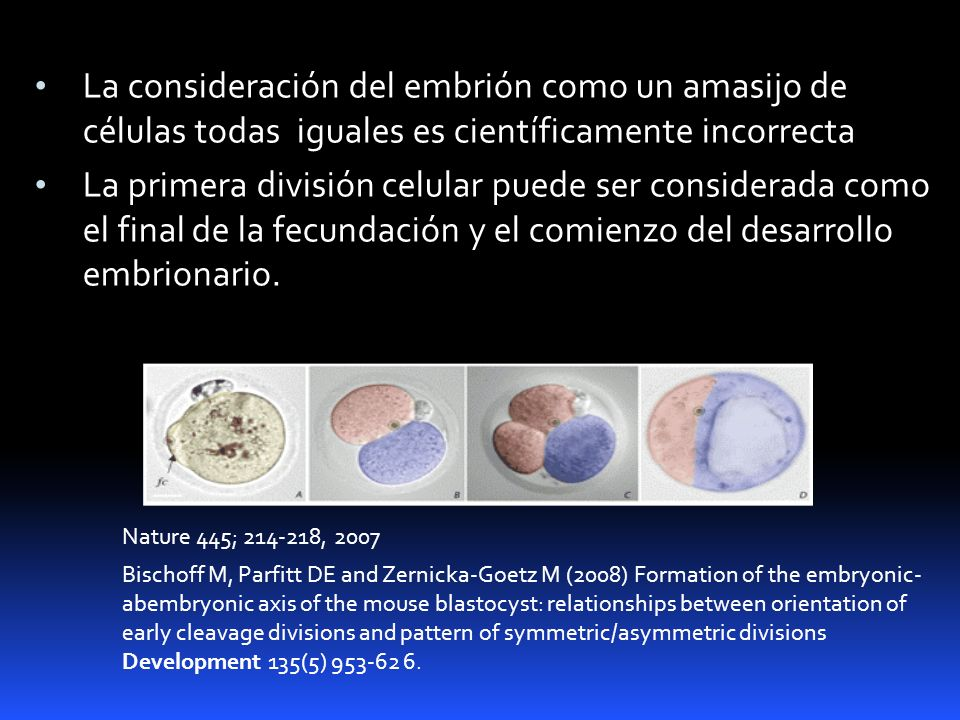 La consideración del embrión como un amasijo de células todas iguales es científicamente incorrecta
