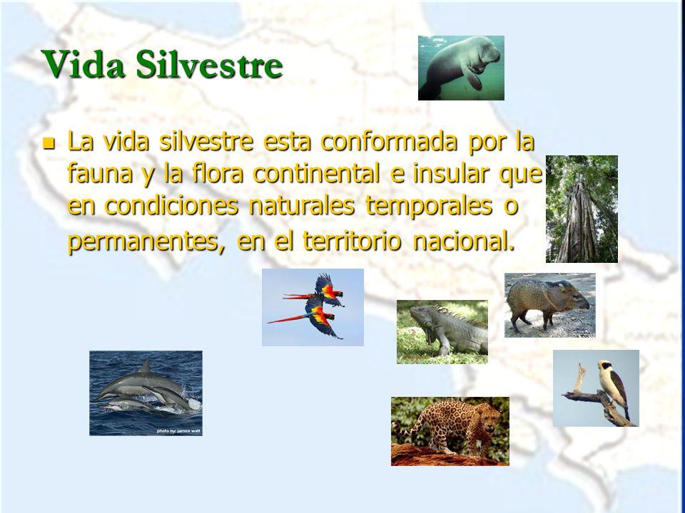 Vida Silvestre