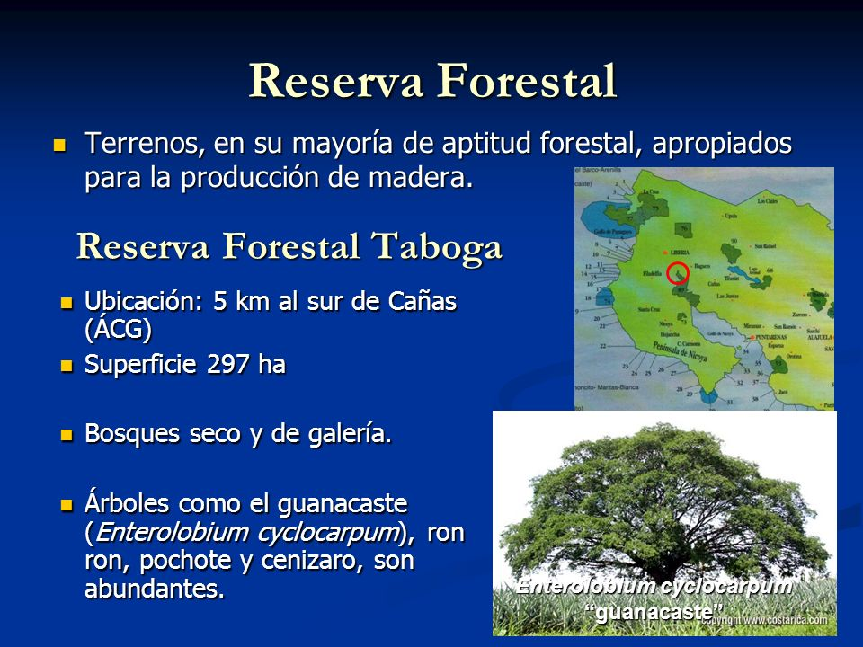 Reserva Forestal Taboga Enterolobium cyclocarpum
