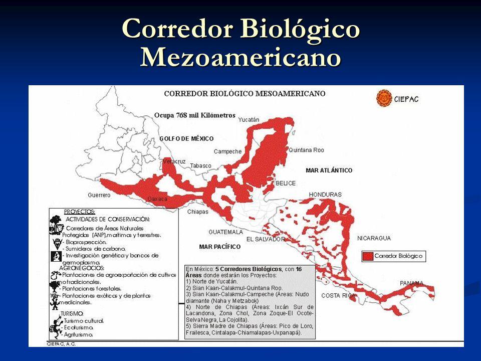 Corredor Biológico Mezoamericano