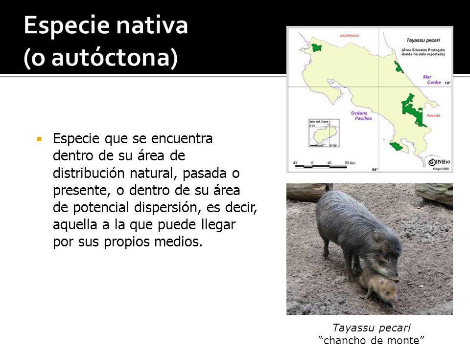 Especie nativa (o autóctona)