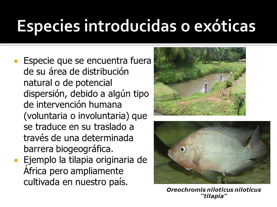 Especies introducidas o exóticas